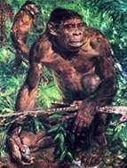 EL ORIGEN DE LOS HOMÌNIDOS (6 millones de años)